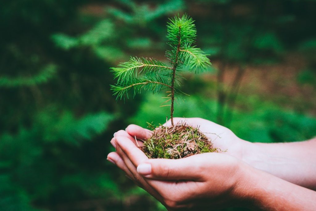 Give Back to the Earth with these Earth Day Activities!
